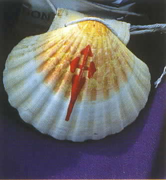 De schelp Saint-Jacques (nom scientifique Pecten maximus)